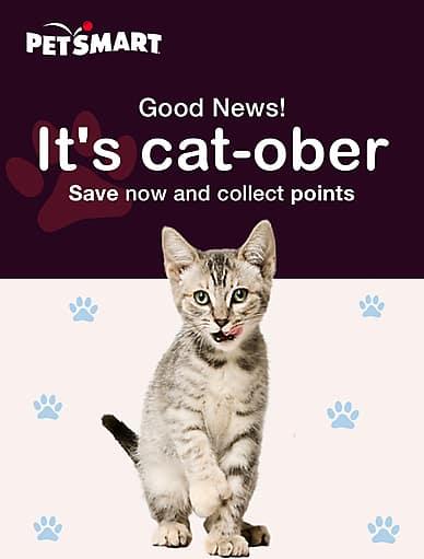 it's Cat-ober! | PetSmart